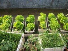 家里怎么种菜以及种菜场地的选择