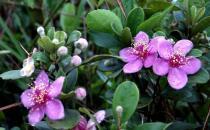家里养的花为什么壮不起来?