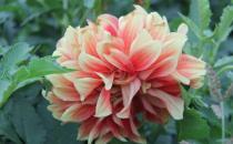 十月份适合养的花的介绍